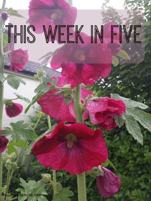 This Week In Five #5
