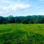 This Week in Five - Pigney's Woods