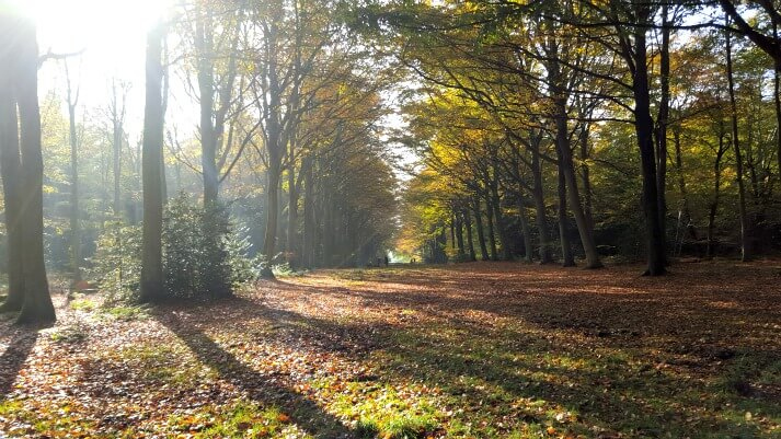 Photography: Walking the Felbrigg Hall Victory V