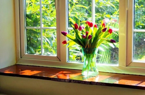 This Week in Five - Tulips on the windowsill