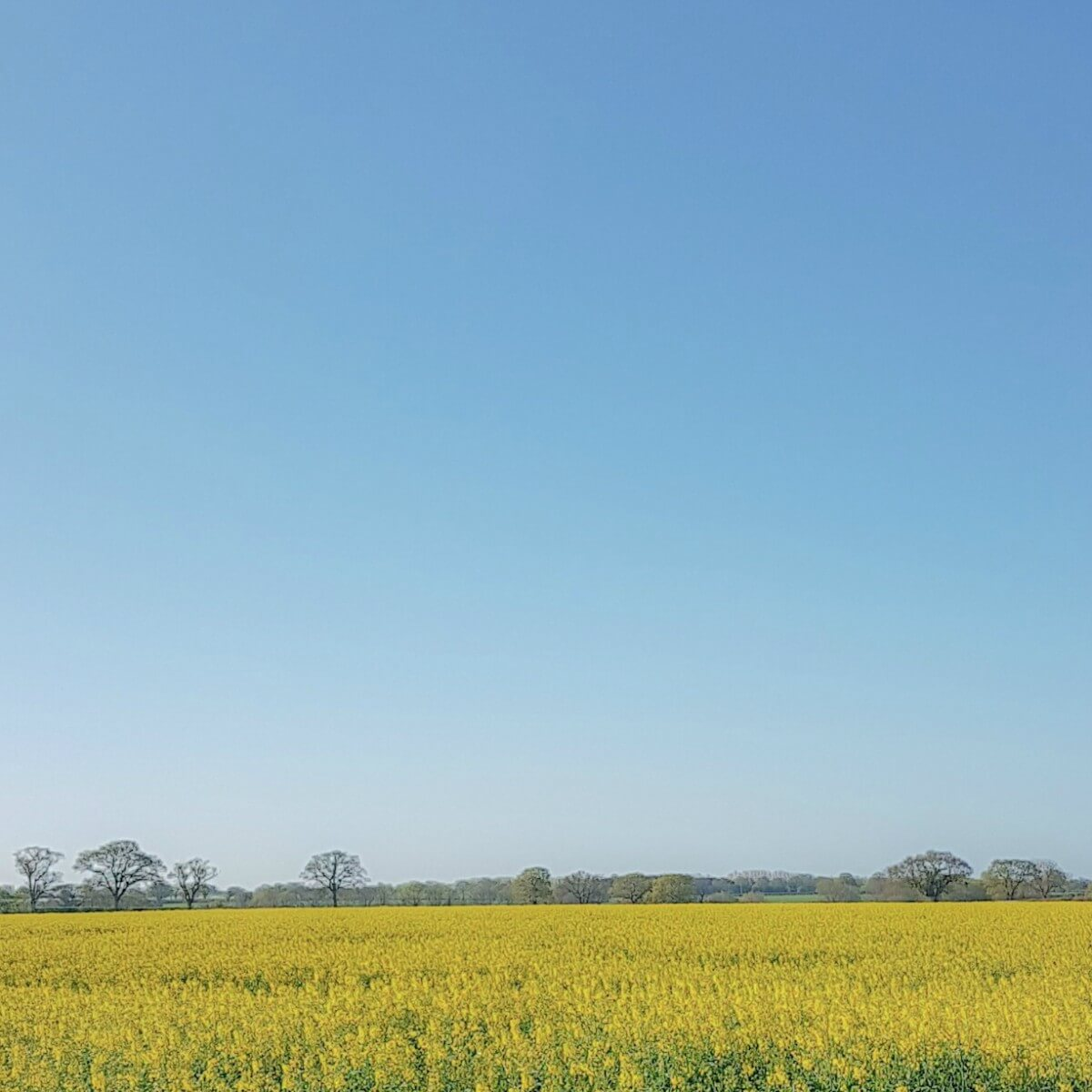 rapeseed field - Some things for the weekend