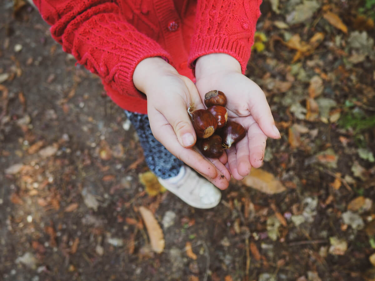 Liked & Loved - conkers