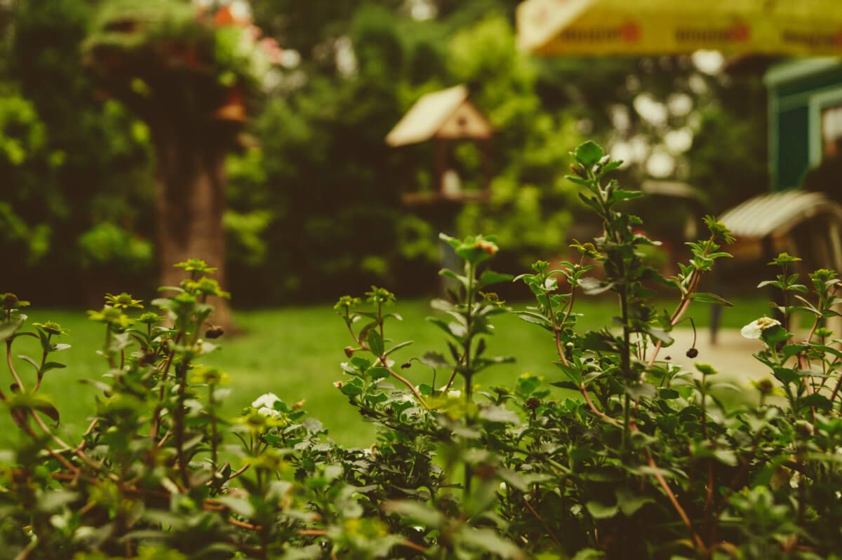garden plans for 2019 - lawn