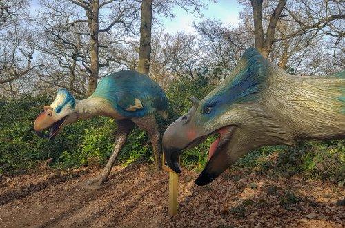 Roarr Dinosaur Adventure - dino trail